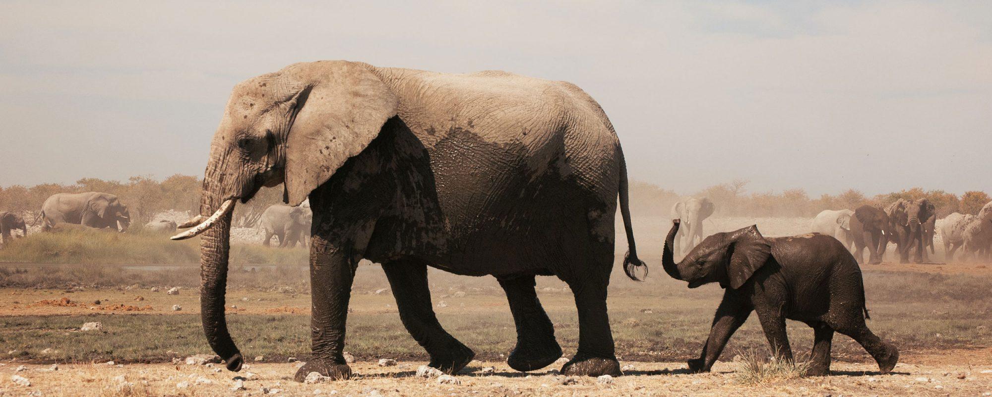 amiga-imagine-elephants-big
