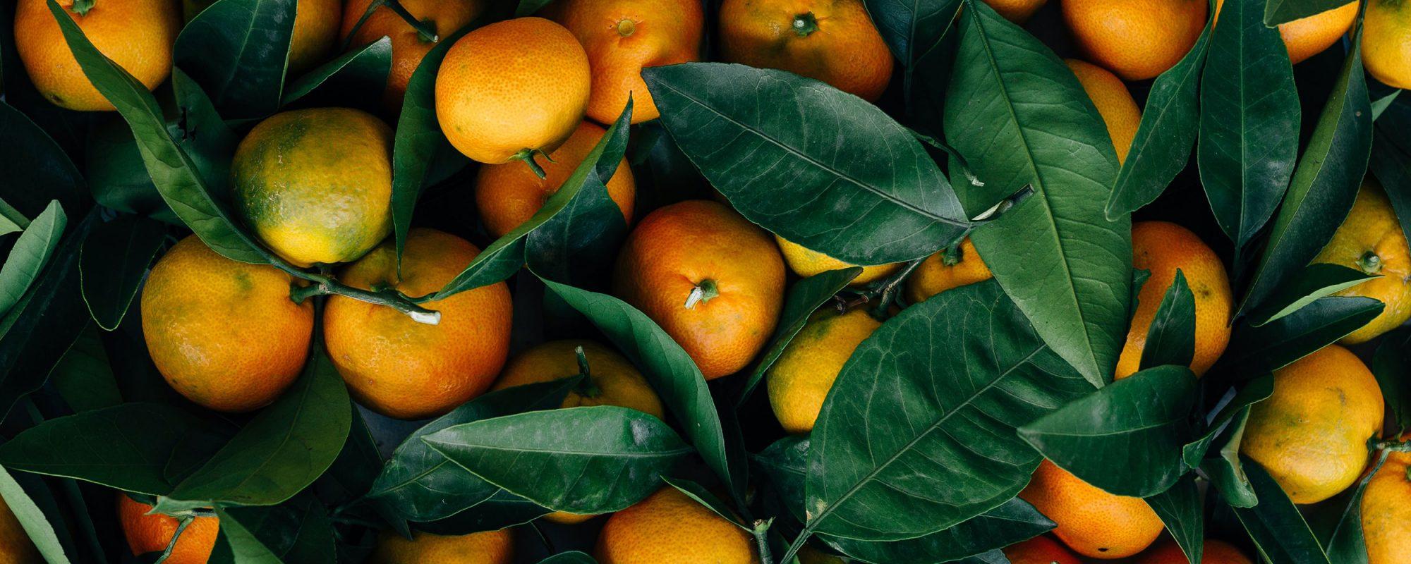 amiga-transformacion-citricos-big
